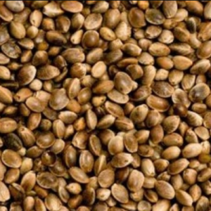 bulk wholesale regular unfeminized hemp seeds cheap colorado pick up